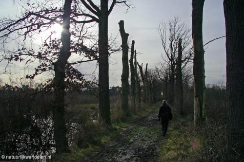 witteveen 06